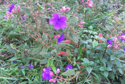 MORE WILD FLOWERS