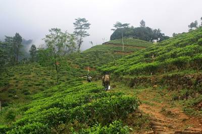 Entrance to the Tea estate.