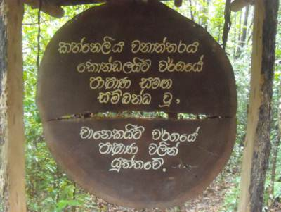 More about soil composition of Kanneliya