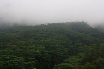 The mist…We were invited in to the jungle.