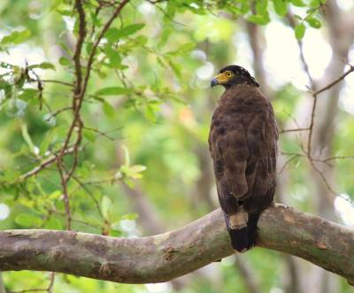 At the entrance we met this crested serpent eagle