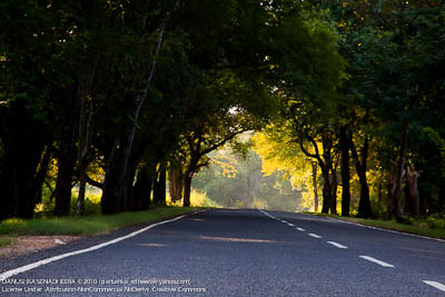 Tree canopy on A4 road had made beautiful scenery with the sunrise.