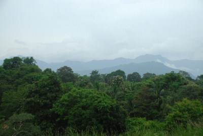 MOUNTAINS OVER JUNGLE
