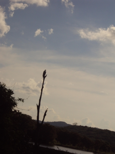 The silhouette of an eagle in the distance