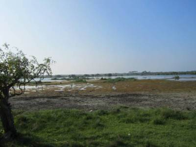 Kumana Villu – With lot of birds