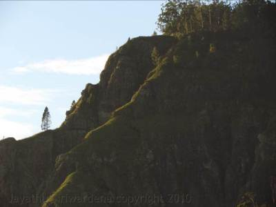A lone tree on the Ella rock (Zoomed)