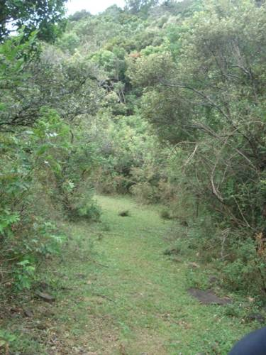 Trail surrounded by thick forest 