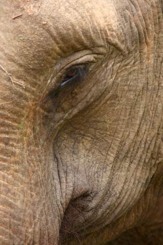 Elephant Abstract - Yala National Park
