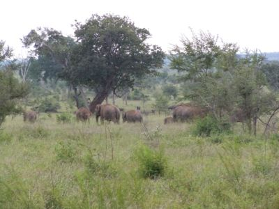 Herd of elephants seen at a distance