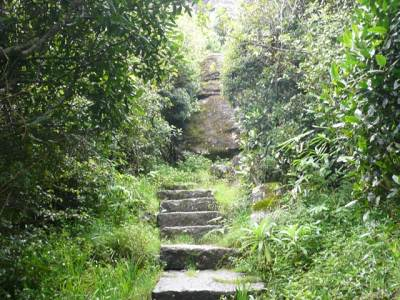 the path was turned in to a stepped one through the vegetation