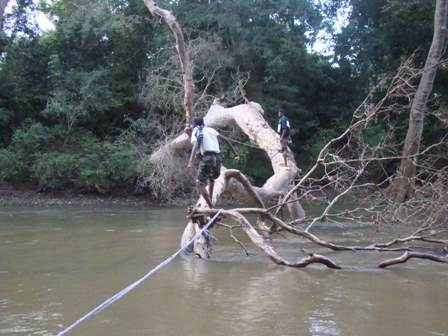 ....... and others came along using a fallen tree as a bridge