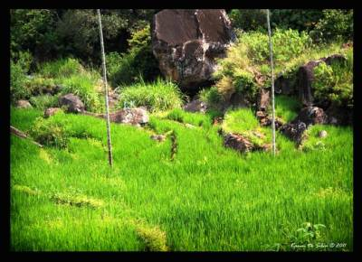 Through the village and paddy fields…