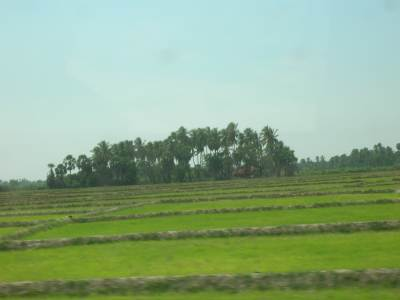 Lush Greenery in areas Already Cultivated