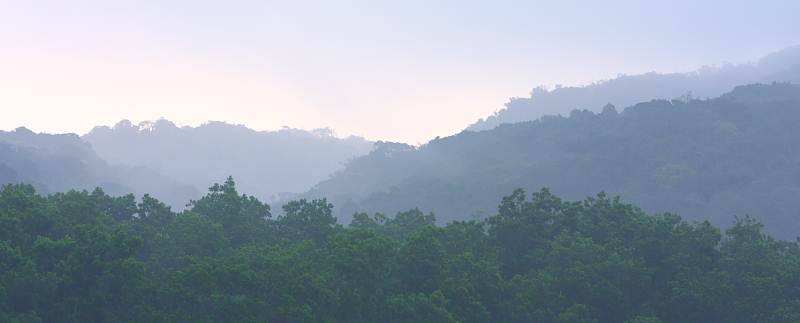 View of forest (regrown) and the distant mountains