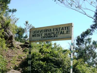 Reaching West Haputale Division of Udaveriya Estate where the Devil's stair case is located.