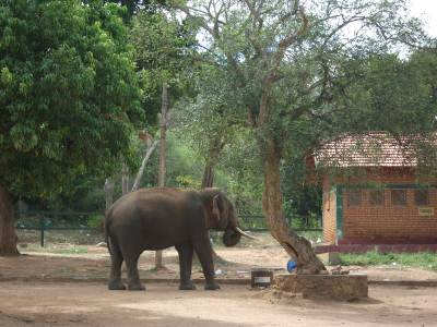 Sometime Elephants come close to Sithulpawwa Viharaya