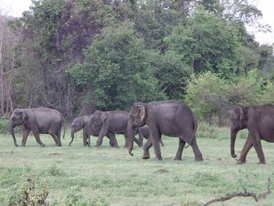 First herd of elephants seen