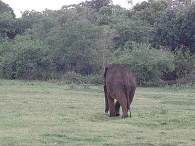 Lonely elephant