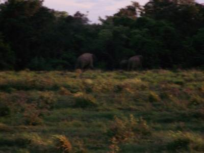 We met some jumbos on our way back but couldn't get a good view as it was around 6.30 pm and dark