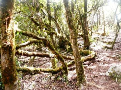Evidences for an upcountry wet (cloud) forest