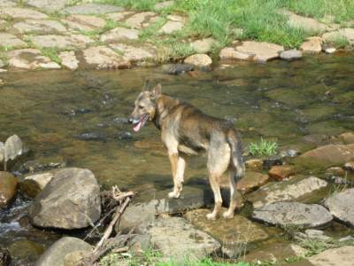 Duke inspects the stream across the road