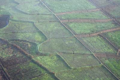 ..and paddy fields which looked more like a geometrical drawing