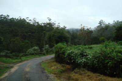 On the way from Pattipola Station to Horton Plains