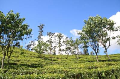A government owned tea estate on the way