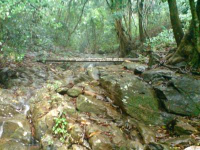 Inside the Hanthana Forest Reserve
