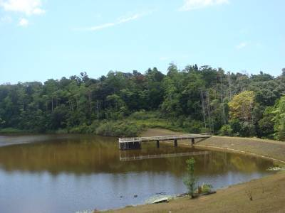 Natural forest surrounding Hiyare Reservoir