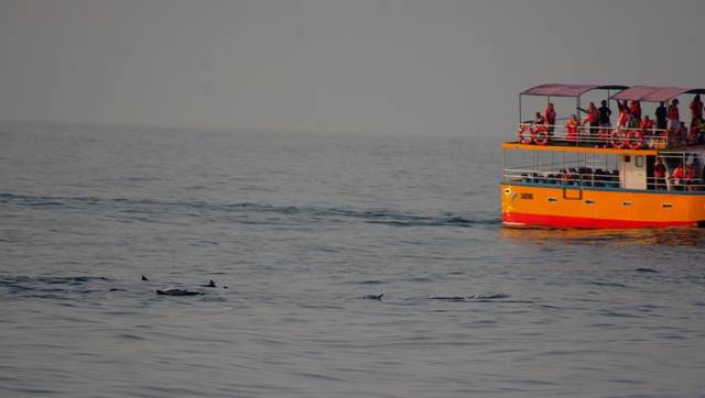 some boats got lucky detecting Spinner Dolphins first
