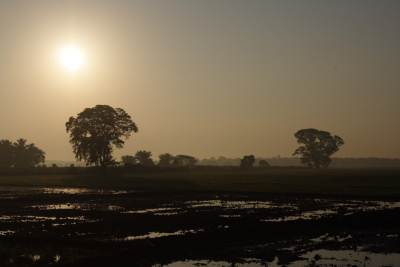 Sun Rise Over the paddy fields - On the way to Kalametiya