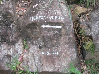 The place where the Horton Plain trail branches from the trail to the viewpoint