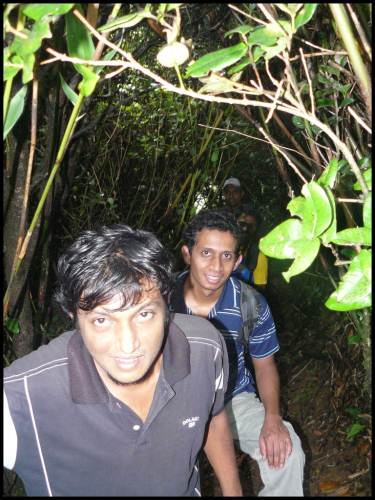 In thick jungle