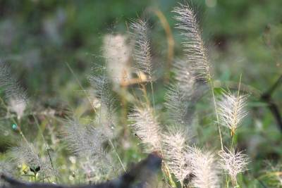 The Flowery Grass