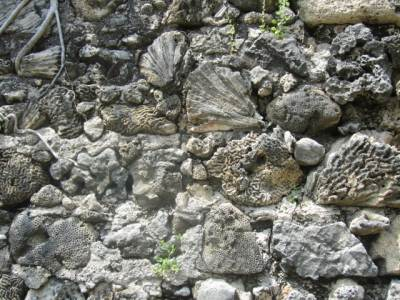 Lime Stone Wall Formation