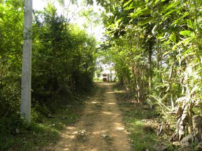 Road to Aligama Cottage