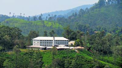 a tea factory