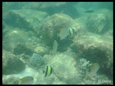 We could see thousands of Butterfly fish in different colors