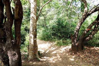 The foot path towards the Kumara Ella