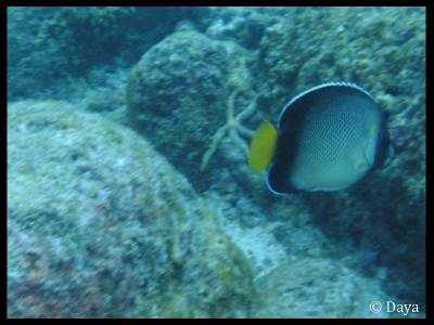We saw different types of Butterfly fish