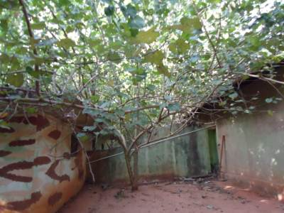 Main terrorist's house at Puthukkudiyirruppu hidden among trees
