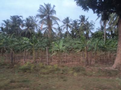 Plantain & Coconut Plantation at Vishwamadu