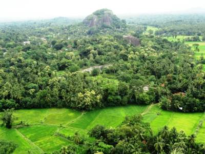 Lush Greenery seen from the top