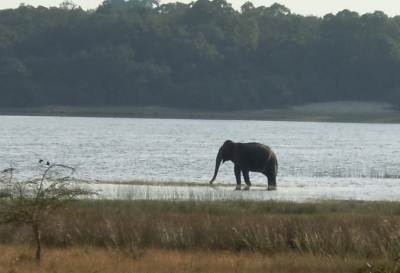 There was another elephant seen at a fair distance