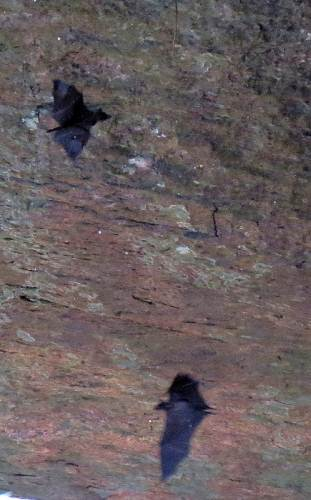 and there were bats