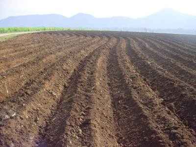 Newly prepared lands for cultivation