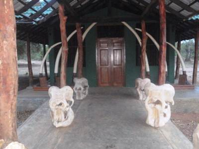 Tusks and Elephants' skulls
