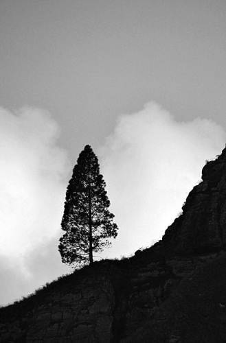 lonely tree of Ella rock