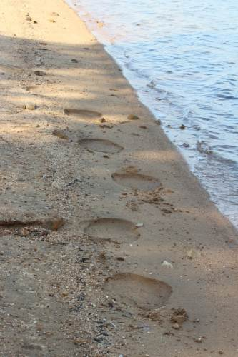 elephant footsteps